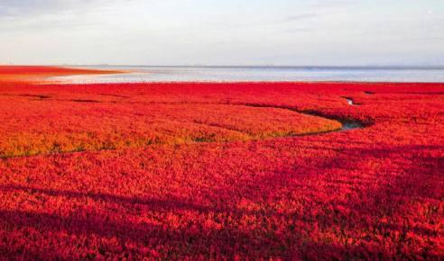 (网站测试用)唯爱东北秋色——红海滩看不一样的中国红